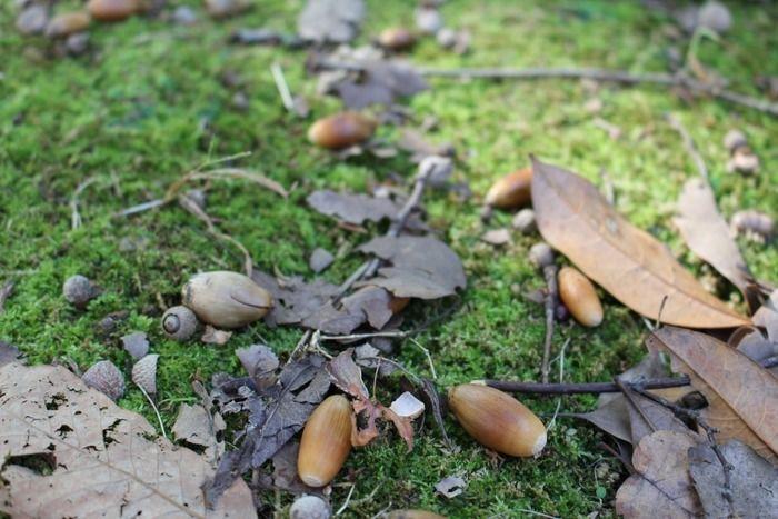 枯れ葉とどんぐり