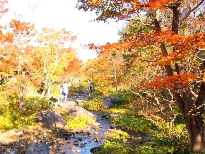 国営昭和記念公園の川沿いの紅葉