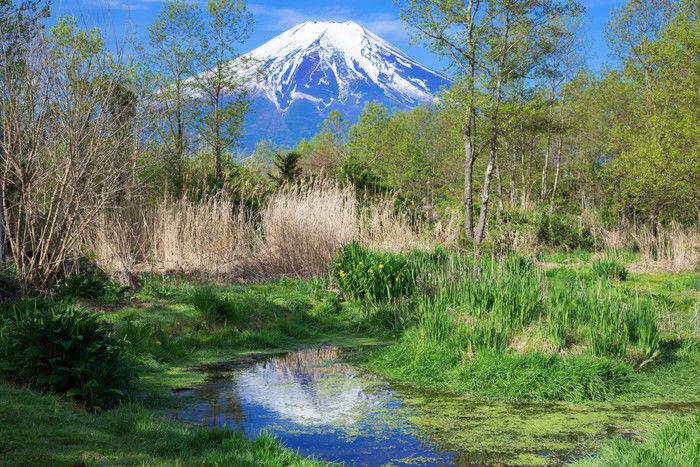 朝霧ジャンボリーオートキャンプ場から見える富士山