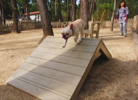 キャンプ・アンド・キャビンズ那須高原のドックランで犬が遊ぶ様子