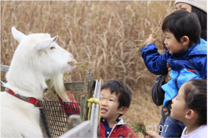 ヤギと戯れる子供達