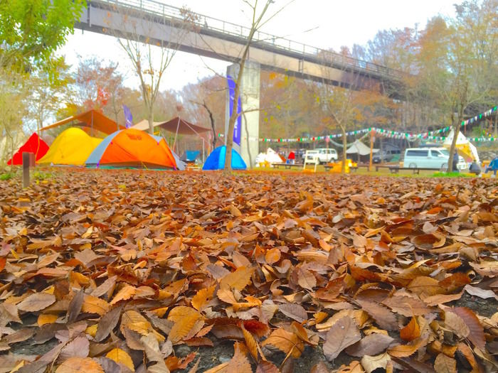 「長瀞オートキャンプ場」フリーサイトの落ち葉の絨毯とカラフルなテント