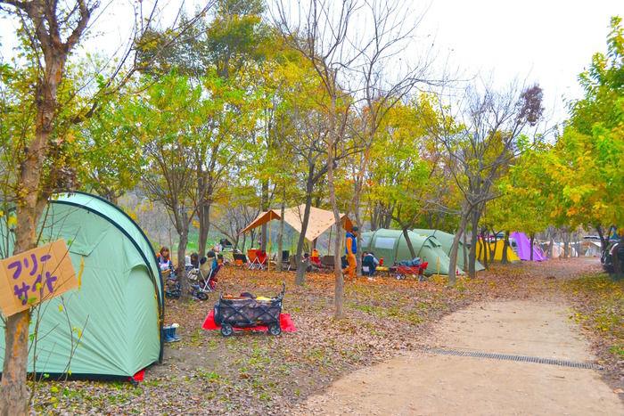 「長瀞オートキャンプ場」のフリーサイトの様子