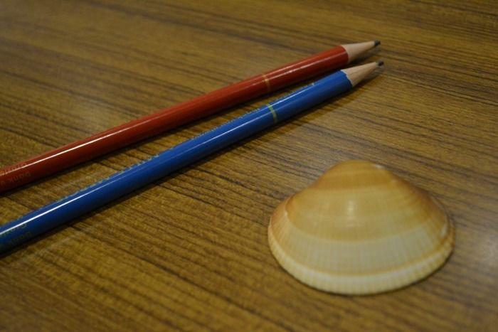 貝殻と色鉛筆