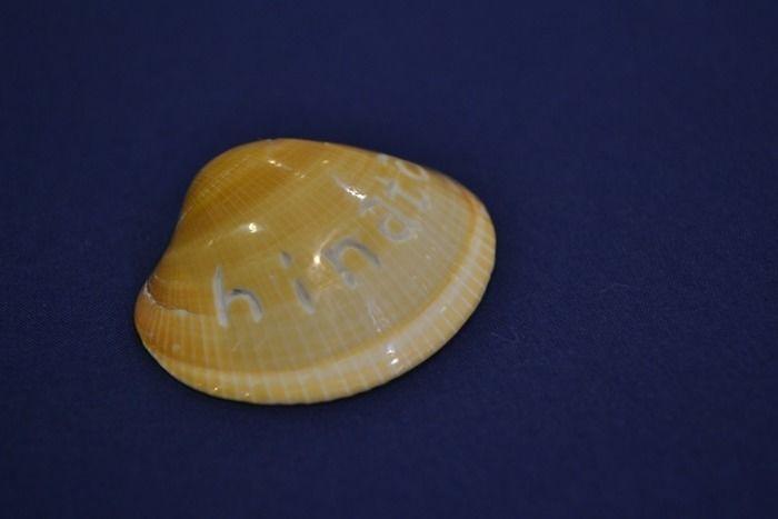 やすりで磨かれた貝殻