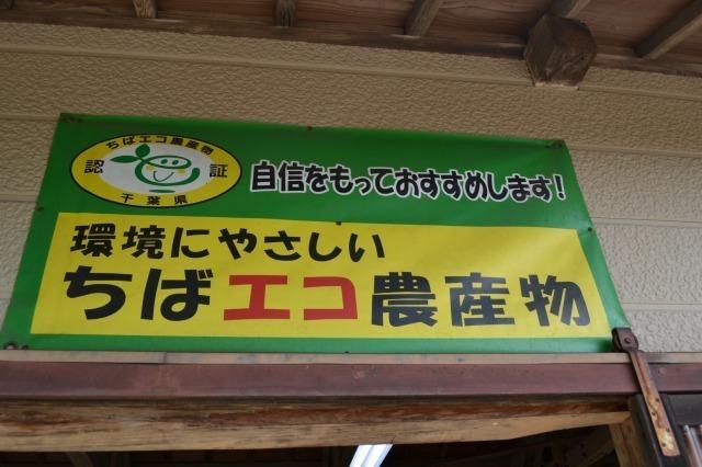 千葉県,房総半島,みかん狩り,三平まさのぶ農園,写真,画像