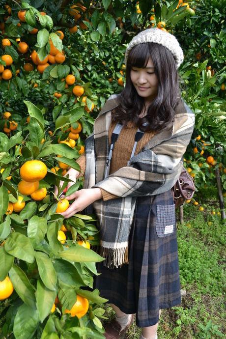 みかんを収穫する女性