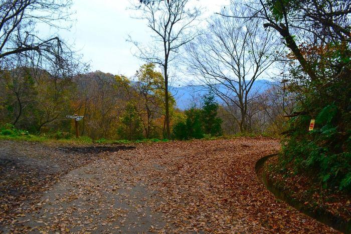 長瀞アルプスの後広がる林道