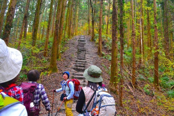 """宝登山の""""200段の階段""""に挑戦するモンベルイベントの参加者"""