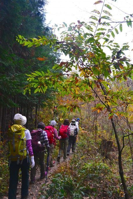 長瀞アルプスのかえでやどんぐりの木の間を通る参加者