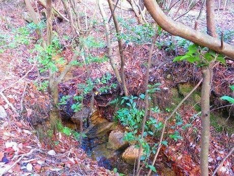 小さな湿原