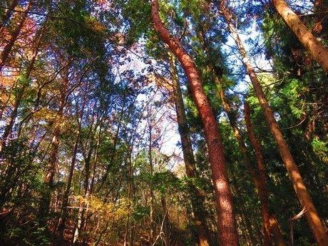 背の高い木々から漏れる木漏れ日