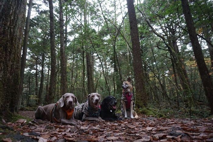 林間で落ち葉の上に座る犬たち