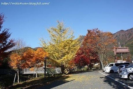 駐車場と紅葉した木々