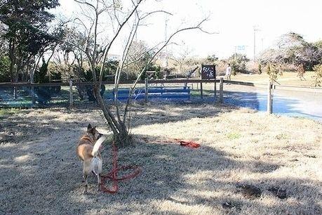九十九里浜シーサイドキャンプ場のドッグランと犬