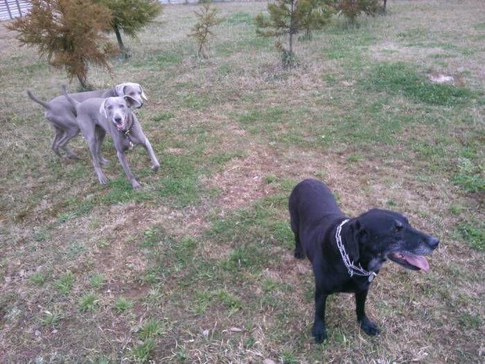 オートキャンプユニオンで戯れる犬達