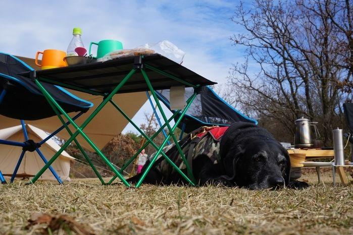 芝生の上でくつろぐ犬