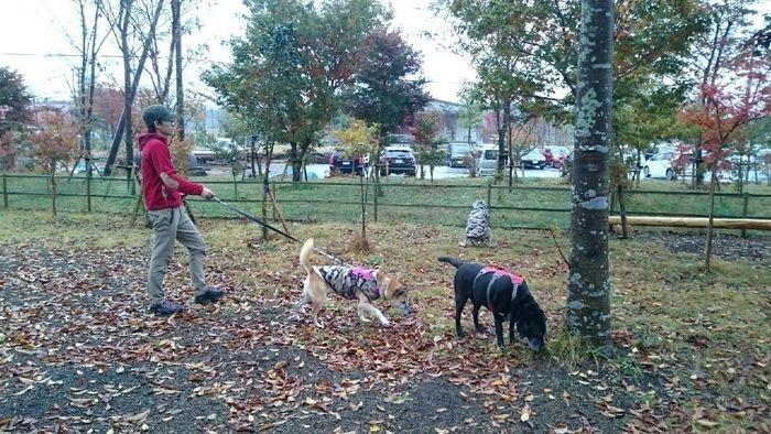 あさぎりフードパーク内で犬の散歩をする男性
