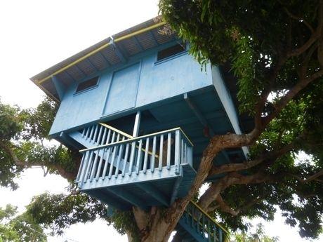 木の上に建つログハウス