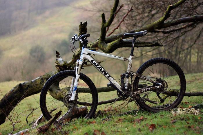 木に立てかけられたクロスバイク