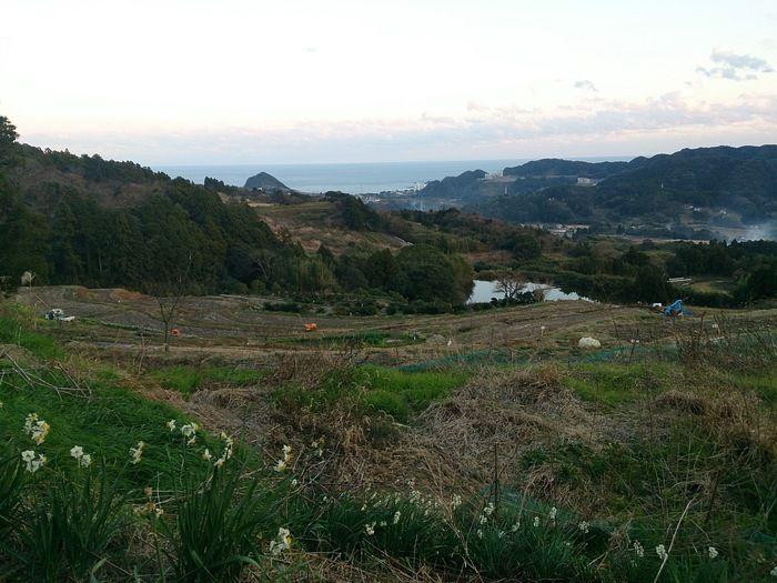 二子領丘棚田の風景