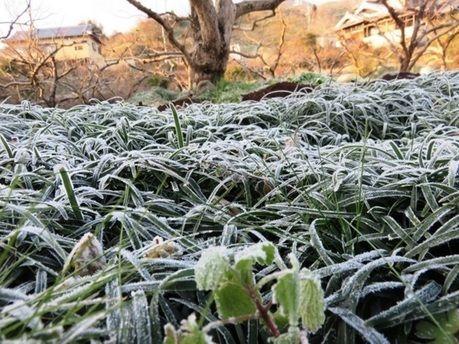 霜がおりた地面