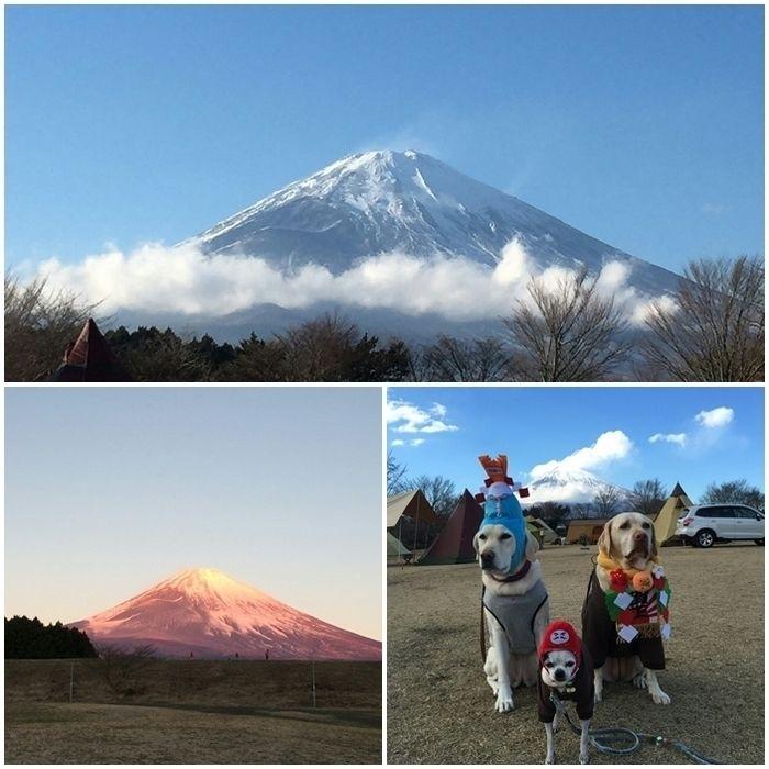 富士山とキャンプ場でお正月のコスプレ青して座る犬たち
