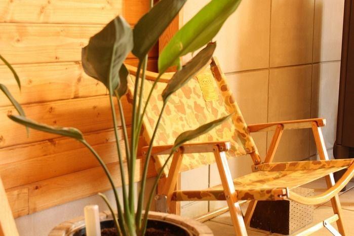 植物の隣に置いてあるカーミットチェア