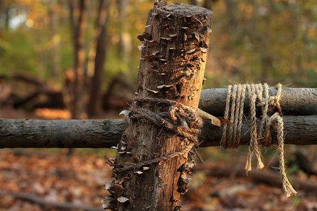 ロープで固定された木