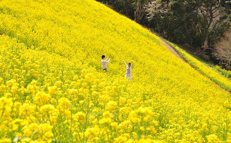 菜の花畑で遊ぶ2人の子供