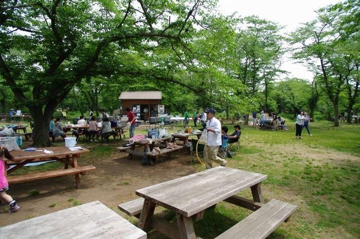 国営武蔵丘陵森林公園の桜の木