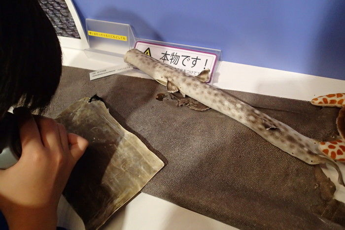ルーペでサメの皮を観察できるコーナー