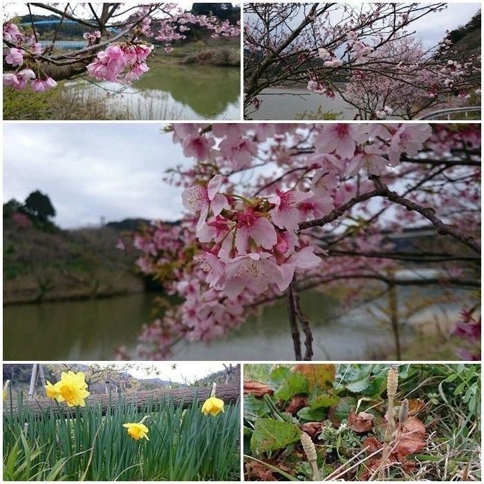 佐久間ダム湖親水公園内で見られる花