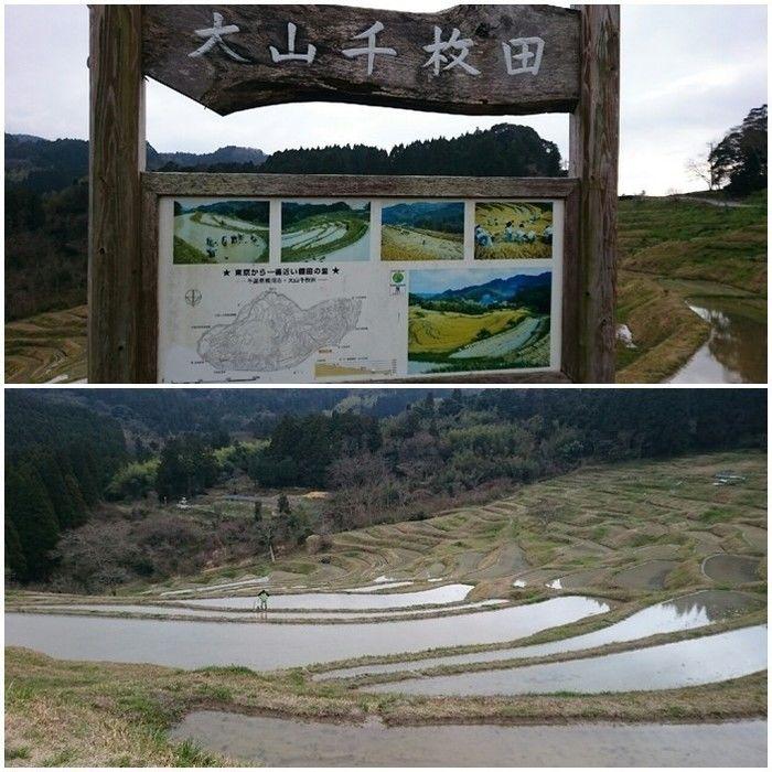大山千枚田の看板と景色