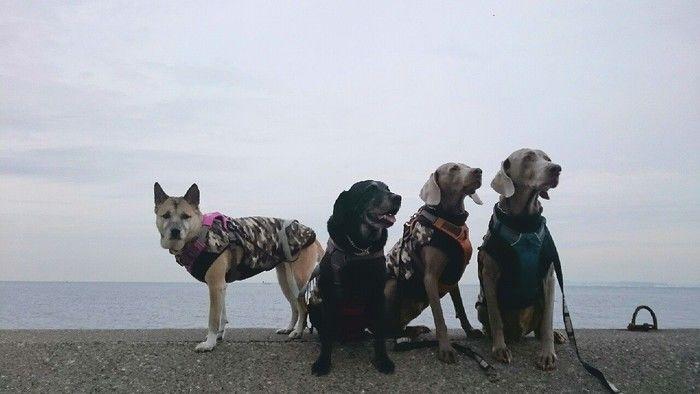 海沿いで座る犬たち