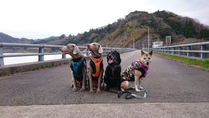 道路に座る犬たち