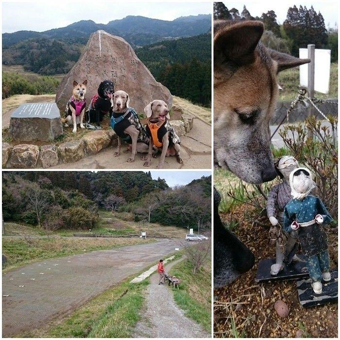 大山千枚田と犬たち