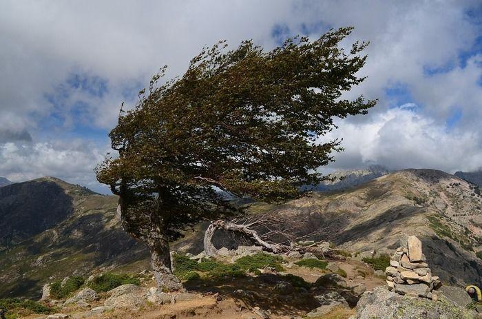 強風に吹かれる山の木