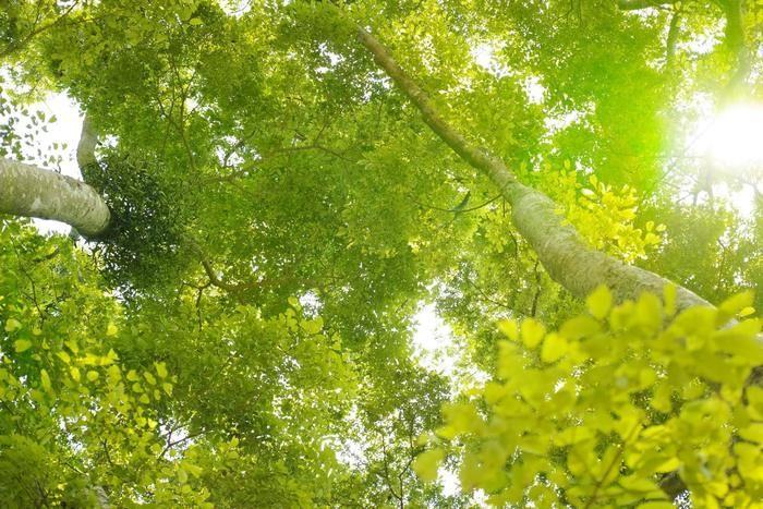 木の根元からの眺め