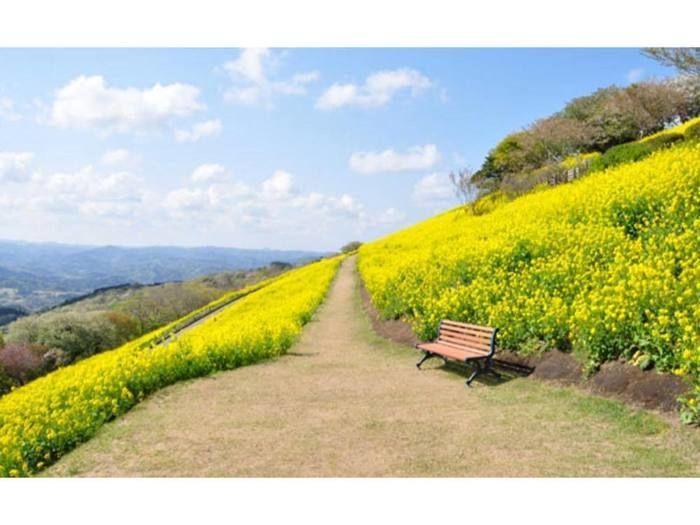 マザー牧場の菜の花畑の道