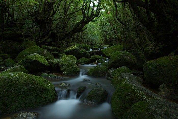 鹿児島県屋久島町を流れる川
