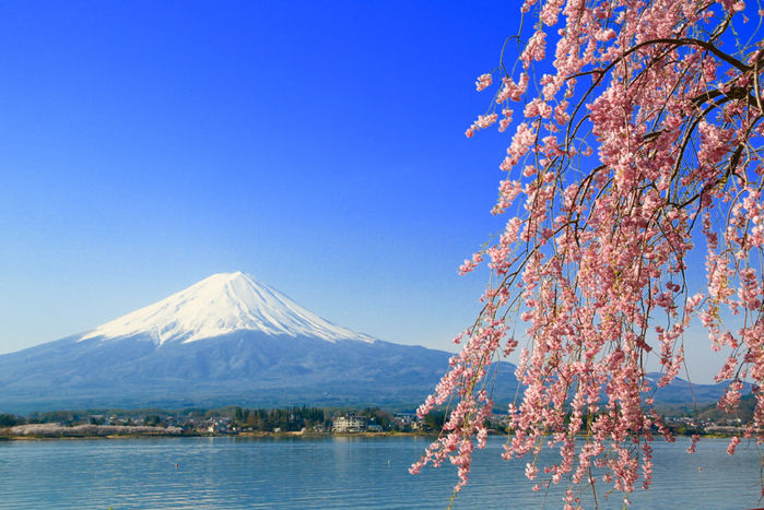 山梨県南都留郡富士河口湖町から見える桜と富士山