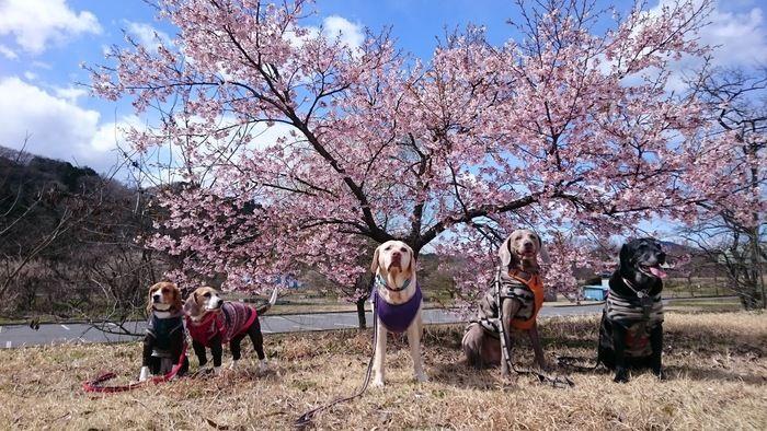 桜の木の下に佇む犬たち
