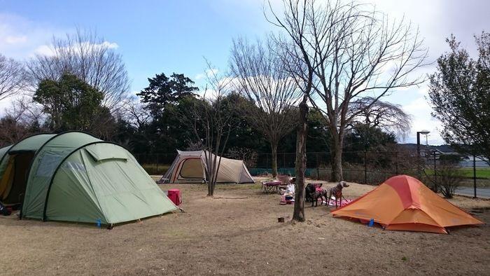 出会いの森総合公園オートキャンプ場のフリーサイト内に張られたテント