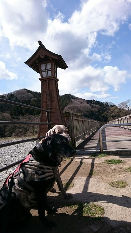 出会いの森総合公園オートキャンプ場の出会いの橋上で佇む犬たち