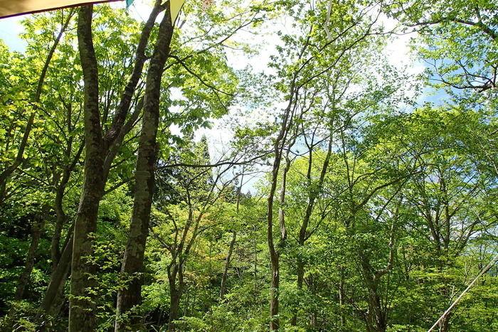 道志村の森