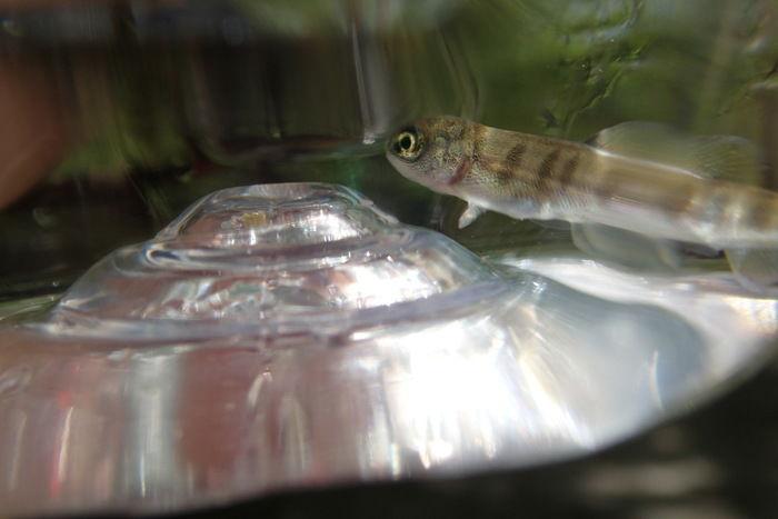ペットボトルに入れられた小さな魚