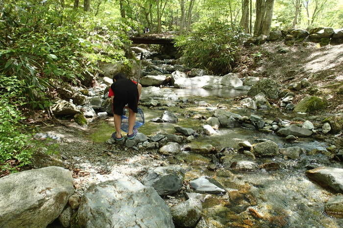 川遊びをする男の子