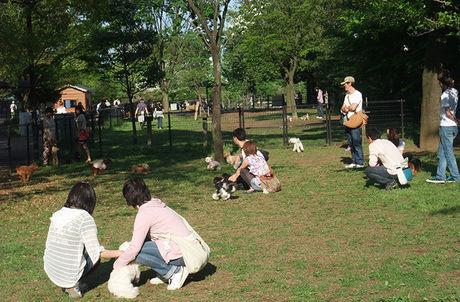 【立川市】国営昭和記念公園のドッグラン