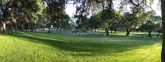 芝生の公園